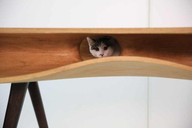 CATable: A Modern Desk For You And Your Cat | Pet furniture, Cat .