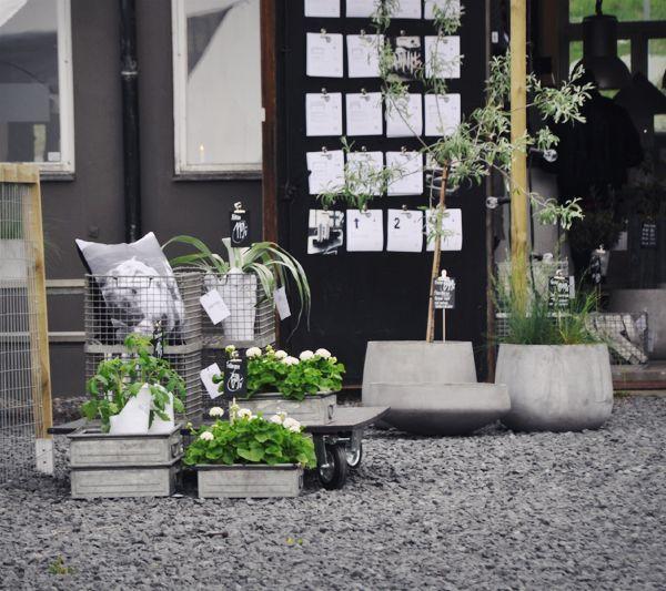 Solid frog   Outdoor inspirations, Outdoor spaces, Outdoor livi