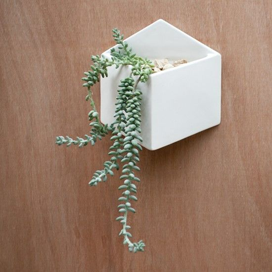 Love love love! Wall hung planter - From Collected   Wall planter .