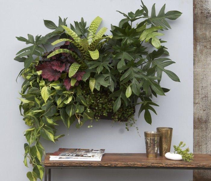 Floara Grubb : Woolly Pocket   Living wall planter, Wall planters .