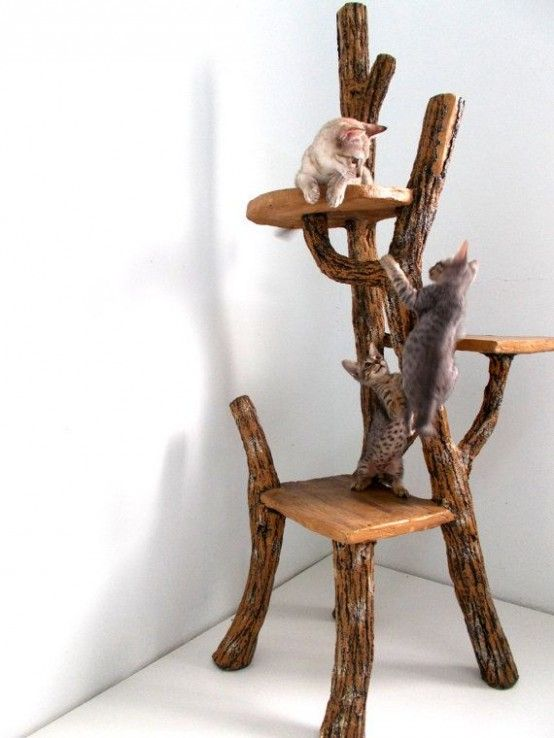 30 Eco-Friendly Driftwood Furniture Ideas To Try | Cat tree, Diy .