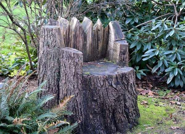 Tree Stump Ideas That Will Blow You Away - Bob Vi