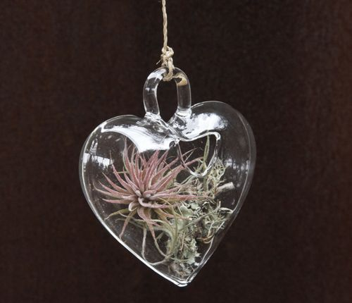 Holiday Wreaths and Tree Ornaments With Natural Plants | DigsDigs .