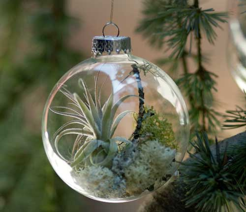 Holiday Wreaths and Tree Ornaments With Natural Plants - DigsDi