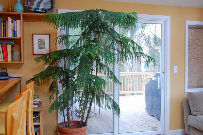 15 Best Low Light Indoor Trees You Can Grow Easily – The Self .