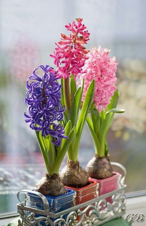 37 Hyacinths Décor Ideas To Breathe Spring In | Beautiful flowers .