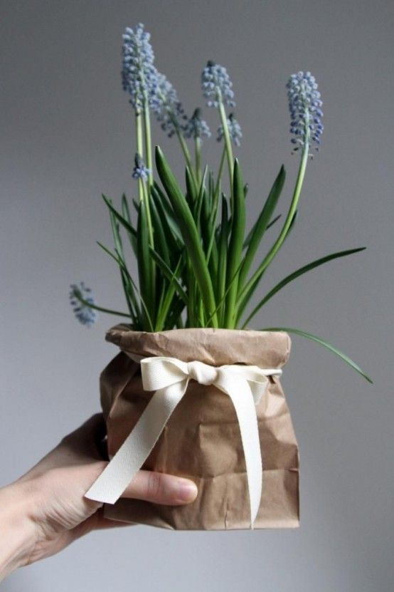 37 Hyacinths Décor Ideas To Breathe Spring In | Plant gifts .