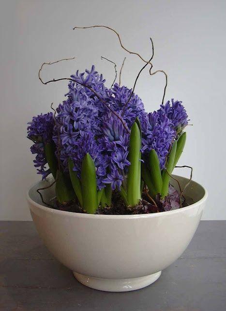 37 Hyacinths Décor Ideas To Breathe Spring In | Teacup gardens .