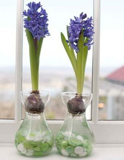 37 Hyacinths Décor Ideas To Breathe Spring In | DigsDigs | Bulb .