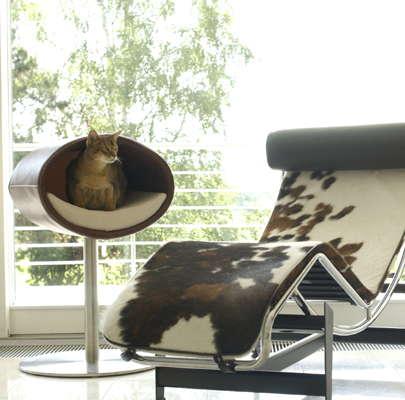 cat modern furniture Archives - DigsDi