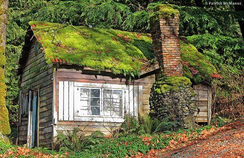 Abandoned Moss Covered Cabin, Washington State, Patrick McManus .
