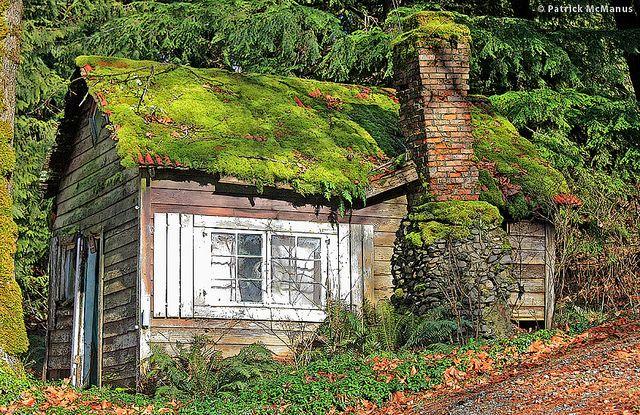 Moss Covered Cabin - Abandoned - Washington | Abandoned, Abandoned .