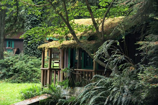 Moss-covered cabins - Picture of Emerald Forest Cabins & RV .