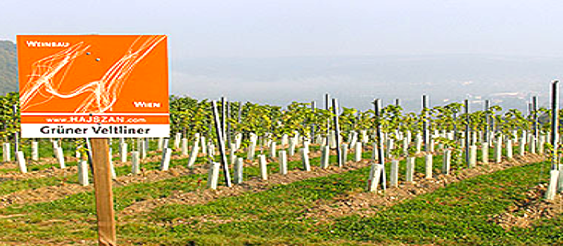 WineChannelTV in Austria at Vienna's Hajszan Winery | Jessica Altie