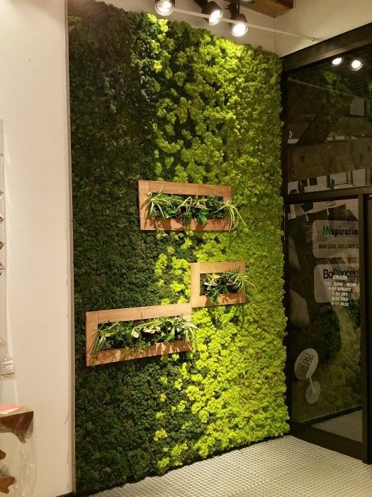 16 Peaceful Indoor Living Wall Designs For Any Home | Walled .
