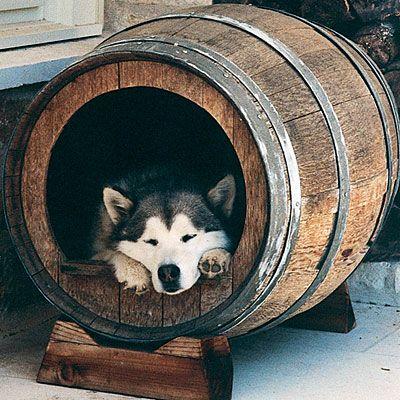 Creative Dog House Designs   Wine barrel dog bed, Barrel dog house .