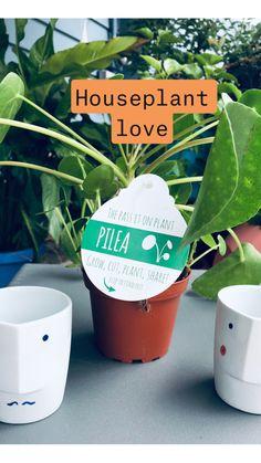 Indoor Gardening: 100+ ideas about plants, container gardening .
