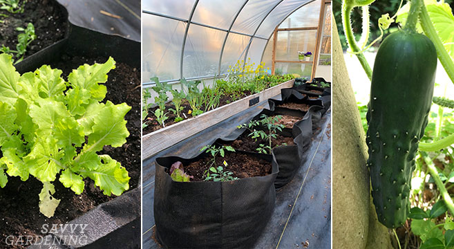Fabric Raised Beds: The Perks of Growing Vegetables in Fabric Po
