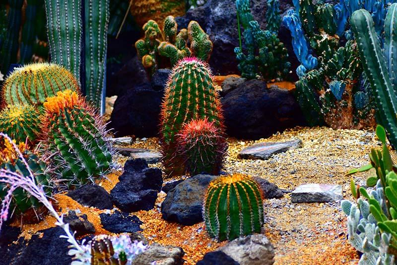 25 Beautiful Cactus Garden Ideas   Green and Vibra