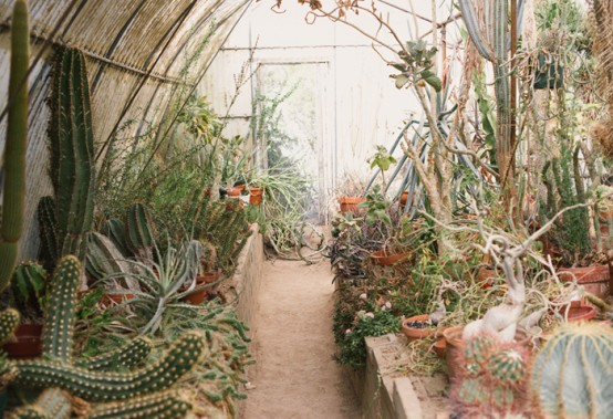 Unusual Green Room With Lots Of Cacti And Succulents - DigsDi