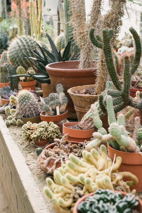 Unusual Green Room With Lots Of Cacti And Succulent With Cactus .